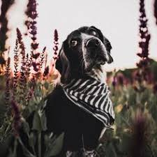 <b>Dog Bandanas</b> & Bowties on Pinterest