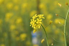 70+ Free Желтый <b>Горчичный</b> & Mustard Images - Pixabay