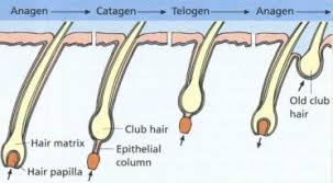 hair grow stages, how to grow hair faster, hair fall problem