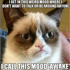 Grumpy-Cat-Meme-05.png via Relatably.com