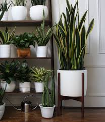 this months theme for urban jungle bloggers is all about dressing your plants in creative plant adi nag sleeping porch