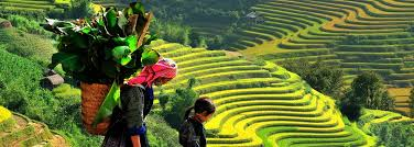 Image result for sapa vietnam