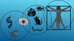 Image result for Gaps! Transgenic, Model Organisms and Human Diseases