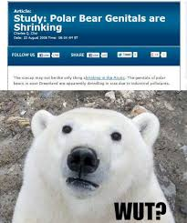 Polar-bear-meme-W630.jpg via Relatably.com