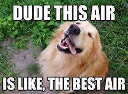 Memes Vault Happy Dog Memes via Relatably.com