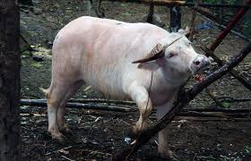 saving endangered animals essay < essay academic writing service saving endangered animals essay