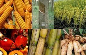 ผลการค้นหารูปภาพสำหรับ รูปพืชเศรษฐกิจ