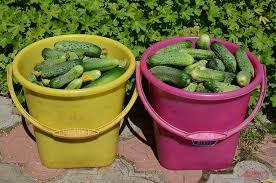 Время урожая. Что можно сделать с собранными ягодами ...