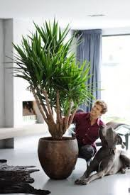 green plants are an essential part of your interior decor you can find the perfect plant for every room grower martin amazing office plants