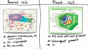 plant and animal cell essay  plant and animal cell essay