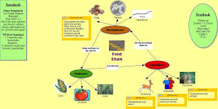 hoomistu  food web diagram templatefood web diagram template  food web diagram template