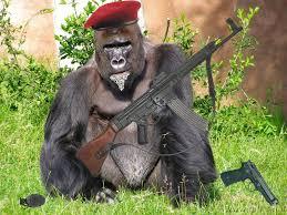 Resultado de imagen para mono con ametralladora