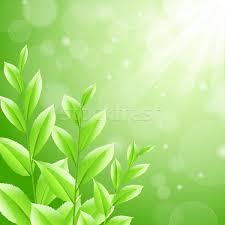 Resultado de imagem para cha verde arvore