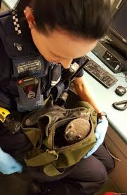 baby koala found in w s backpack during traffic stop in baby koala