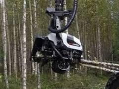 AFM-Forest Ltd