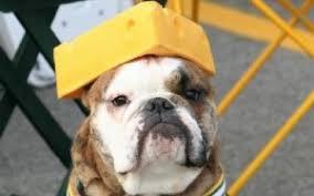 Η δυσανεξία στη λακτόζη στο σκύλο...