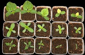 Image result for soil fertilizer
