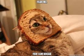 breadingcats1-24.media_.tumblr.com_.jpg via Relatably.com