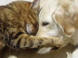 Image result for shelter animals
