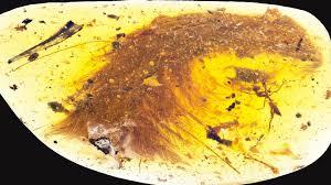 Kehribar taşında 99 milyon yıllık dinozor fosili