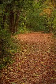 Файл:<b>Осенняя роща</b>.JPG — Википедия