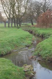 River Roach