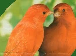 """Résultat de recherche d'images pour """"image oiseau """""""