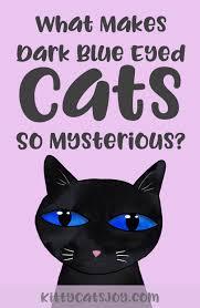 What Makes Dark <b>Blue</b>-<b>Eyed Cats</b> So <b>Mysterious</b>? - <b>Kitty Cats</b> Joy