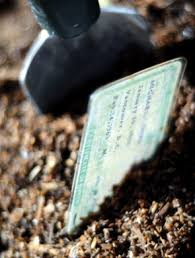gardening generation y