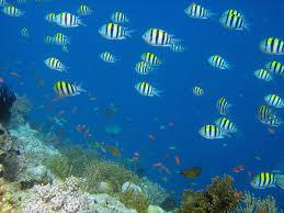 """Résultat de recherche d'images pour """"images fonds marins"""""""