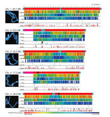 Analysis of the genome sequence of the flowering plant Arabidopsis ...