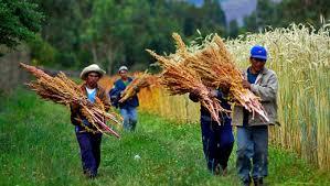 Resultado de imagen para IMAGEnes de LAS INTENCIONES DEL PAPA PARA ABRIL 2015 PEQUEÑOS AGRICULTORES