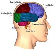 brain-injury Unfortunately brain injuries can occur in a number of different ways and quite often can arise from a blow to the head. - brain-injury-300x273