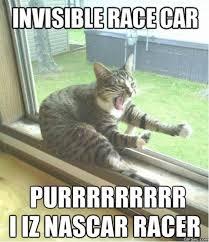 -Racer-Cat-MEMES.jpg via Relatably.com