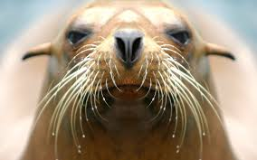 turtle back zoo the world in your backyard behind the scenes sea lion sound