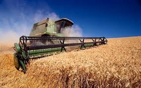 Почему в стране дорожает хлеб?