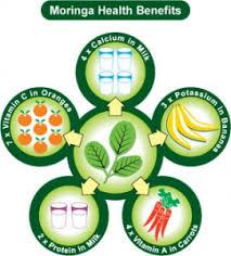 الفوائد الطبية الساحرة لشجرة المورينجا شجرة الحياة moringa oleifera