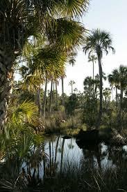 natural environment essay