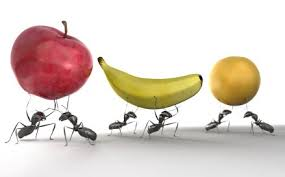 Resultado de imagen para hormigas comiendo frutas