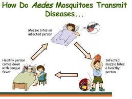 Essay prevent dengue fever Potent International Limited Image titled Prevent Malaria Step