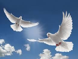 """Képtalálat a következőre: """"white dove"""""""