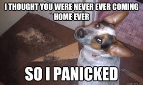 Panic Dog memes | quickmeme via Relatably.com