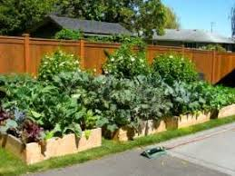 Small Picture Photo of Herb garden ideas growing on crete raised beds flower
