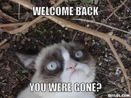 Cynical Cat Meme Generator - DIY LOL via Relatably.com