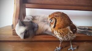 Funny & <b>Cute Owls</b> 🦉[Funny Pets] - YouTube