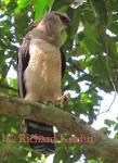 eagle-sighted