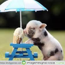 CONCURSO: Animales divertidos ♥ Images?q=tbn:ANd9GcR28TaXIwokvsETxrfjgHSOBbX6CbtMmdJ0PmQVchnpBDDXngRClg