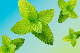 beat the heat stay cool in the summer reader s digest beat the heat peppermint tea mist