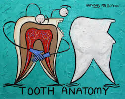 tooth anatomy office dental prints teeth dentist anthony falbo anatomy office