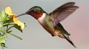 Les oiseaux sauvage du Costa Rica Images?q=tbn:ANd9GcR2g5oclfQ8HvijQlESJ2NncFgOLFf6ZHim3K3StdWeEffzMT80